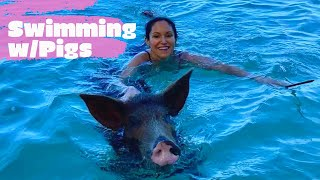 Swimming with Pigs 🐷 in the Bahamas #swimwithpigs #cutepigs #bahamas #govegan #tryvegan #smartpigs