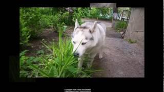 Собака ест траву - что делать?!!
