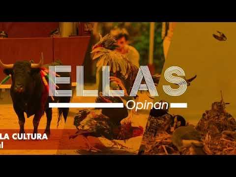 PELEAS DE GALLOS, CORRIDAS DE TOROS Y CAZA DEPORTIVA