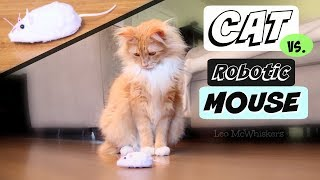 CAT vs. ROBOT MOUSE Toy - Leo McWhiskers