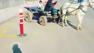 at arabacılar direksiyon ehliyeti alırsa
