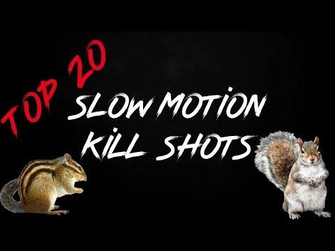 Top 20 Pest