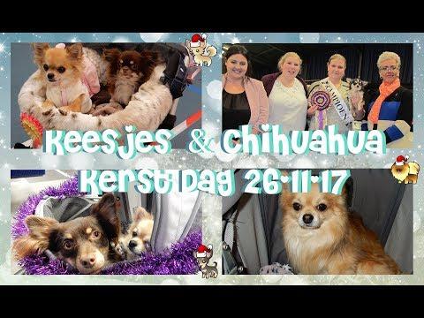 Keesjes & Chihuahua Kerst Dag Wijchen 26-11-17 + Mini Shopog Vlog#23