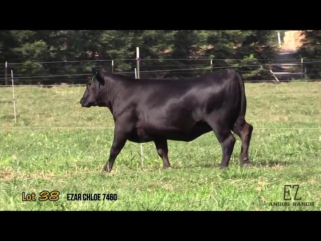 EZ Angus Ranch Lot 38