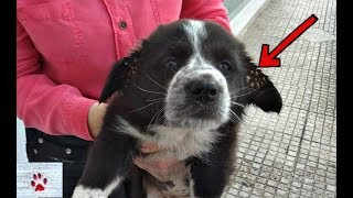 puppy-full-of-ticks-was-abandoned-by-the-side-of-a-road-watch-her-transformation
