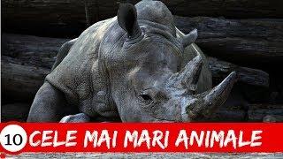 Top 10 Animale Mari