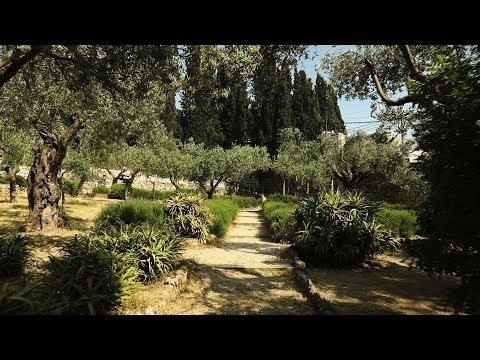 Israel Tour 2019: Garden of Gethsemene