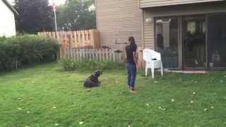 Go Home Session For Maize | Matt Hendricks | Follow The Leader Dog Training And Rehabilitation Llc