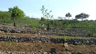 #UpsusDiary6 - Pertanian Desa Ngandong Kab Tuban Jawa Timur