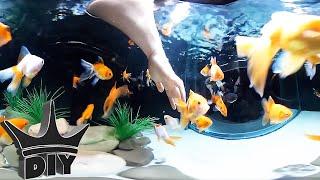 Underwater Aquariums in 360° - Goldfish and arowana tanks!!