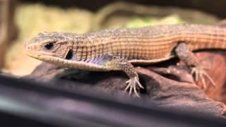 Все О Домашних Животных: Герозавр - Почти Динозавр