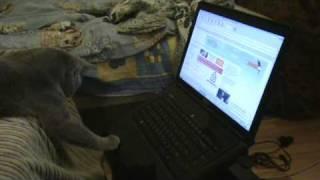 Британский кот и компьютер