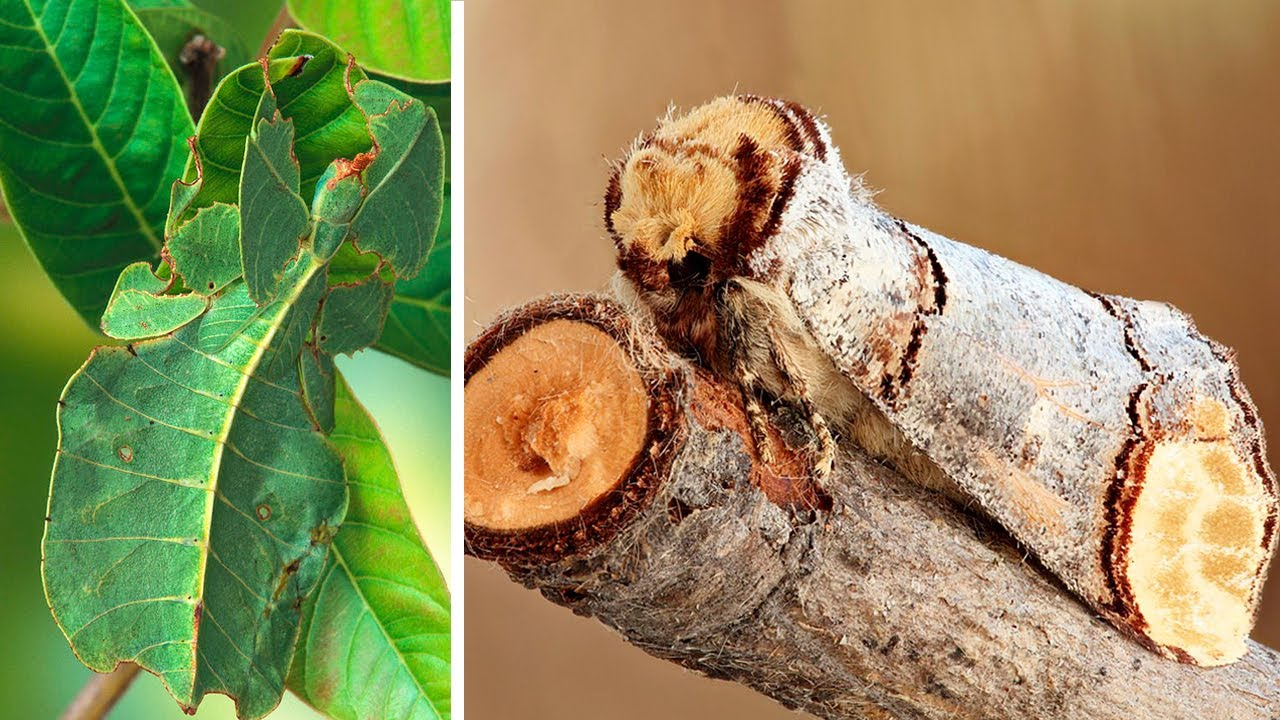 10 Coolest CAMOUFLAGE ANIMALS and Insects - YouTube