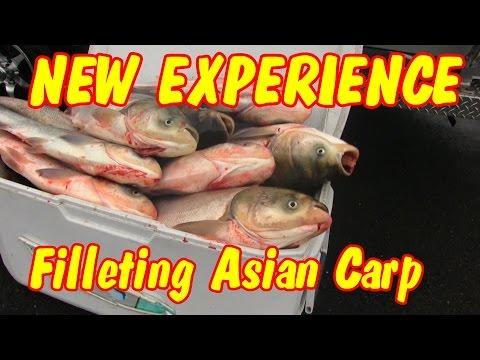 Filleting Asian Carp for fish fry