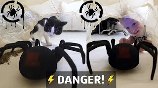 Giant Spider from cave! How will cat and kid react?