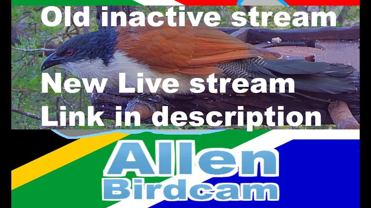 LIVE HD Allen Birdcam (50+ Species) - South Africa - Hornbill, Hadeda, Genet and many more
