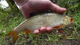 Дождь и рыбалка