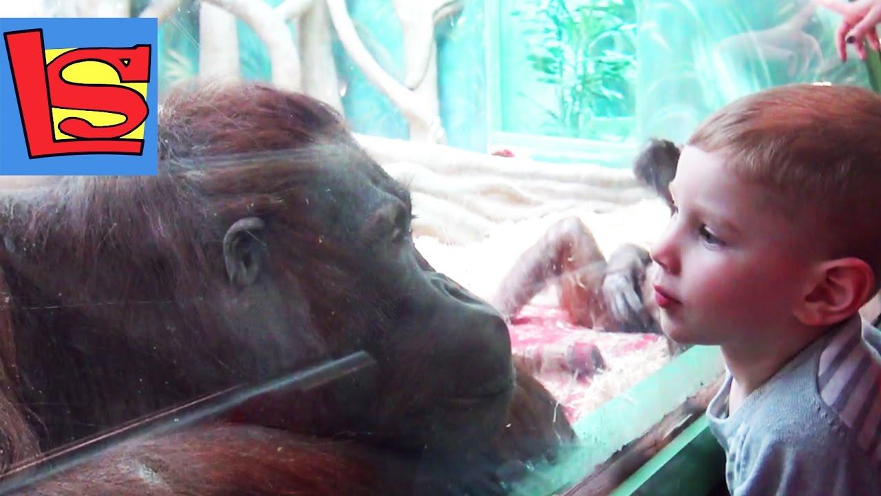 В зоопарке Умная обезьяна Сова Гарри Поттера и гонки ...
