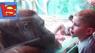 В зоопарке Умная обезьяна Сова Гарри Поттера и гонки слонов в Московском зоопарке
