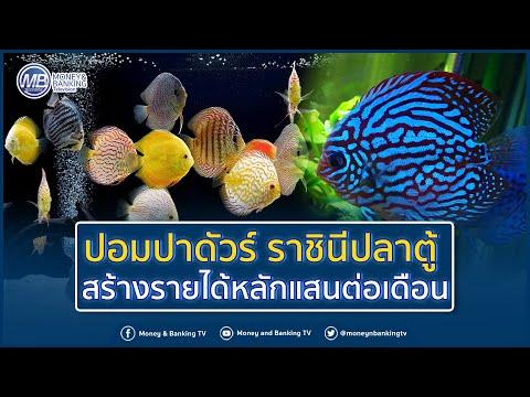 ปอมปาดัวร์ ราชินีปลาตู้ สร้างรายได้หลักแสนต่อเดือน