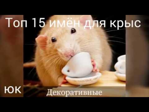 Вопрос: Какую кличку придумать для чёрной декоративной крысы?