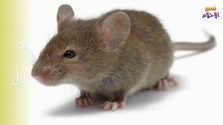 تفسير حلم رؤية الفأر في المنام