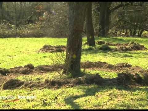 Hessenschau kompakt: Umpflanzaktion in Hofheim am Taunus