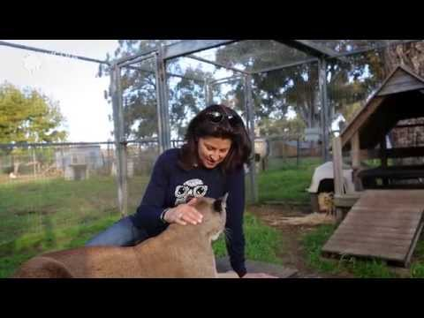 Australia's retreat for retired zoo & circus animals