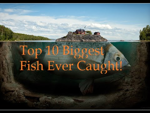 Top 10 biggest fish ever caught youtube for What is the biggest fish ever caught