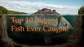 Top 10 Biggest Fish Ever Caught!