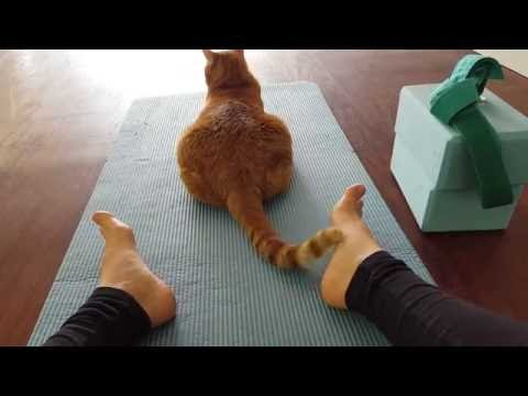 Cute Yoga Cat Tickles During Yoga