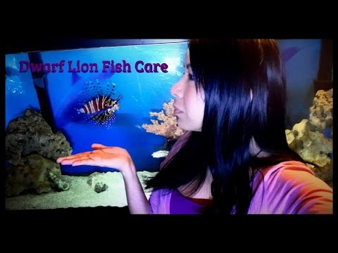 Fish Profile: Dwarf Zebra Lionfish Care