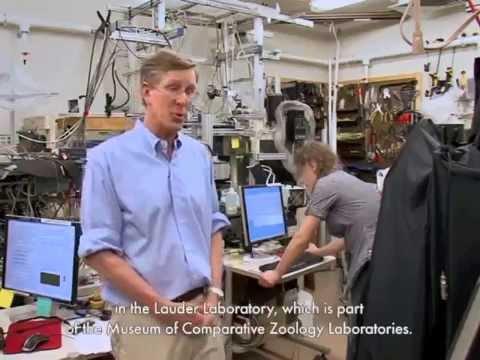 Studying Fish Locomotion at Harvard's Robotics Lab on YouTube