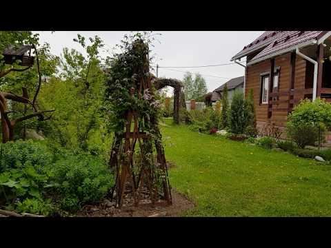 Неприятности  в саду: МОНИЛИОЗ  войлочной вишни. Как бороться.