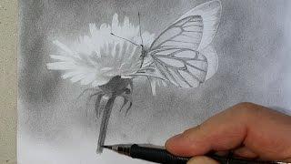 Рисуем поэтапно бабочку карандашом