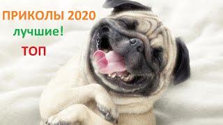 Самые ржачные приколы / Тик ток / Юмор / Попробуй не засмеяться / 2020