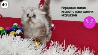 Нарядные котята играют с новогодними игрушками#Кошки #Коты #Котята #Прикольные #Веселые