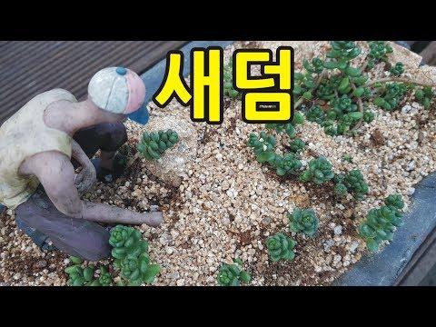 다육식물 새덤 기와장에 옮겨심기 succulent plan