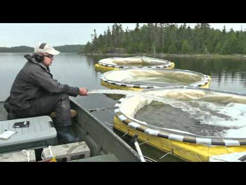 Department Of Fisheries And Oceans, Human Resources Video
