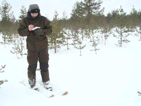 Как в лесу считают зверей? Охотоведы раскрыли секреты зимнего пересчета животных