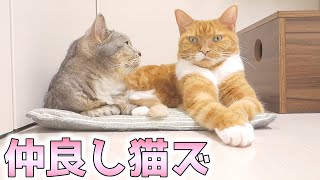 cute cats relaxing together