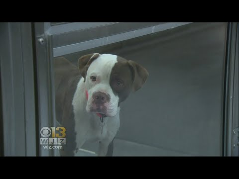 Baltimore Co. Passes Law To Create Safer Conditions For Outdoor Pets
