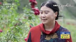 《中国三农报道》 20201209|CCTV农业 - YouTube