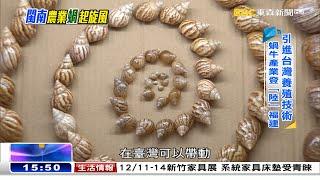 引進台灣養殖技術 閩南農業「蝸」起旋風《海峽拚經濟》@東森新聞 CH51