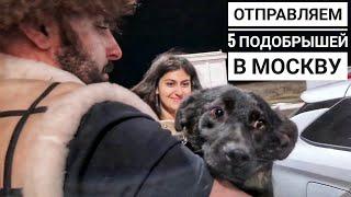 Отправляем 4 бездомных собак на ПМЖ в Германию и Одну в Москву Сбитая Дина начинает активничать