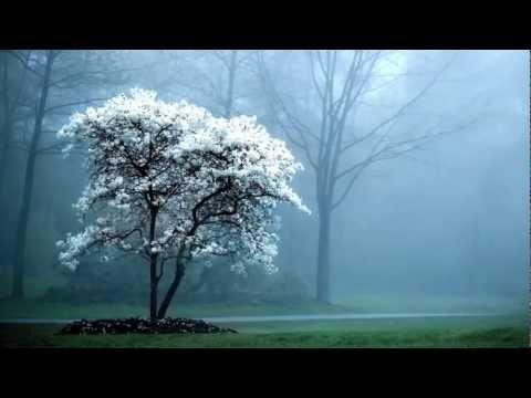 3d Tree Live Wallpaper Fondos De Pantalla Gratis De Paisajes Youtube