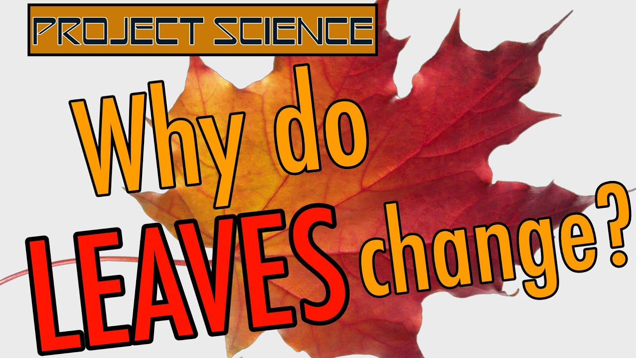 Why Do Leaves Change Color? | Project Science - YouTube