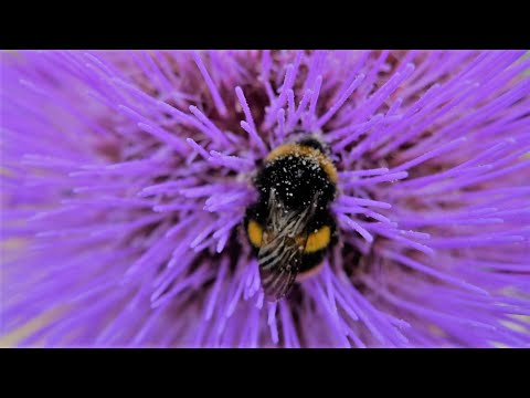 plants for bees and pollinating insects all through the year