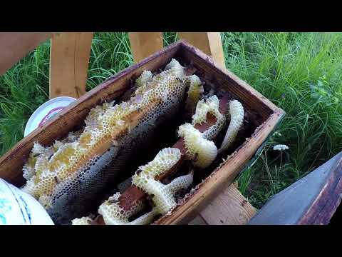 Вопрос: Кто собирает подснежниковый мед?