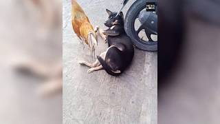 Friendship between a dog and a hen , predator and prey become best friends for the first time ever
